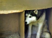 Przelękły przybłąkany pies obraz royalty free