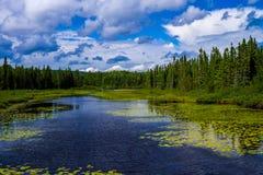 Przelotna burza, kaskadowa rzeka, Minnesota Zdjęcia Stock
