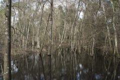 Drzewo w wodzie Zdjęcia Royalty Free