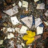 Przelotne spojrzenie natura w chaosie zniszczenie obrazy stock
