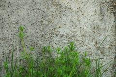 przemysłowe tło Zielonej trawy dorośnięcie od dna zdjęcia stock