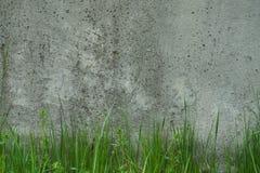 przemysłowe tło Zielonej trawy dorośnięcie od dna obrazy royalty free