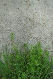 przemysłowe tło Zielonej trawy dorośnięcie od dna obraz stock