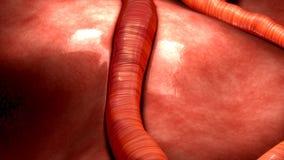 Przepływ Krwi w ciele ludzkim royalty ilustracja