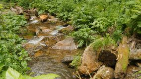 Przep?ywu puszka czysta woda przez kamieni w las wody spadku fotografia stock