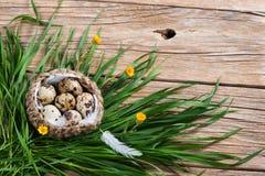 Przepiórek jajek Easter dekoracja Obrazy Stock
