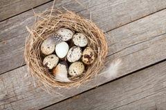 Przepiórek jajek gniazdeczko Zdjęcie Stock