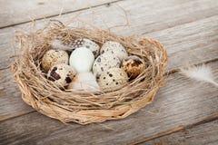 Przepiórek jajek gniazdeczko Obrazy Stock