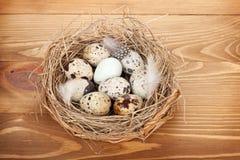 Przepiórek jajek gniazdeczko Obraz Royalty Free