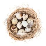 Przepiórek jajek gniazdeczko Fotografia Stock