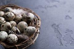 Przepiórek jajek zbliżenie Zdjęcia Royalty Free