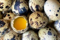 Przepiórek jajka. Zdjęcia Stock
