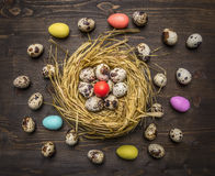 Przepiórek jajka i barwiący dekoracyjni jajka w gniazdują granicę, miejsce dla teksta na drewnianym nieociosanym tło odgórnego wi Obrazy Royalty Free