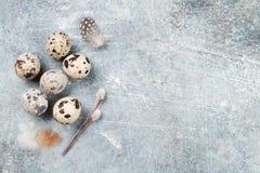 Przepiórek jajka i kici wierzba dostępny karciany Easter eps kartoteki powitanie Obraz Stock