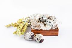 Przepiórek jajka kłamają w brązu drewnianym pudełku na białym tle Blisko suchych żółtych kwiatów Wielkanoc fotografia stock