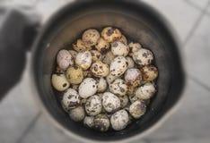 Przepiórek jajka na niecce po gotować Obraz Royalty Free