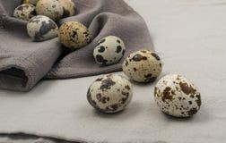 Przepiórek jajka na Popielatym tle Obrazy Stock
