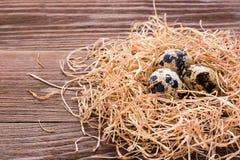 Przepiórek jajka na stosie słoma Obraz Stock