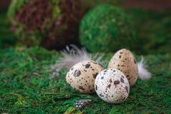 Przepiórek jajka na zielonym tle Wielkanocny pocztówkowy pojęcie Obrazy Royalty Free