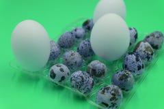 Przepiórek jajka nad ciemnym starym tłem Kurczaka i przepiórki jajka na czarnym stole tło barwiący Easter jajek eps8 formata czer zdjęcia stock