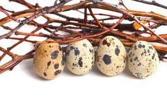 Przepiórek jajka są na białym tle Zdjęcia Stock