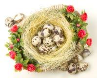 Przepiórek jajka są w gniazdeczku Obrazy Stock
