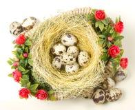 Przepiórek jajka są w gniazdeczku Zdjęcie Royalty Free