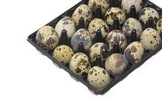 Przepiórek jajka w białym tle pojęcia zdrowe jedzenie Obrazy Royalty Free