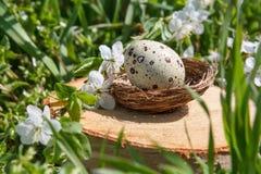 Przepiórek jajka w dekoracyjnym gniazdeczku na fiszorku Na tle zielona trawa zdjęcie royalty free