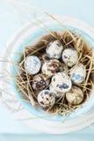 Przepiórek jajka w garnku Obraz Stock