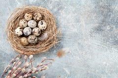 Przepiórek jajka w gniazdeczka i kici wierzbie dostępny karciany Easter eps kartoteki powitanie Obraz Stock