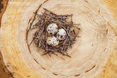 Przepiórek jajka w gniazdeczku Zdjęcia Royalty Free