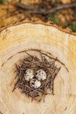 Przepiórek jajka w gniazdeczku Zdjęcie Stock