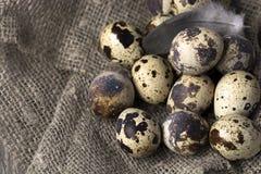 Przepiórek jajka w gniazdeczku na nieociosanym drewnianym tle pojęcia zdrowe jedzenie Fotografia Stock