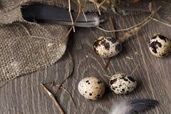 Przepiórek jajka w gniazdeczku na nieociosanym drewnianym tle pojęcia zdrowe jedzenie Obraz Royalty Free