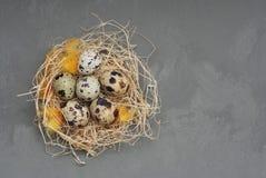 Przepiórek jajka w gniazdeczku z piórkiem i suchym sianem Wielkanocny wakacje Szary tło Odbitkowa pasta Wieśniaka styl Odgórny wi zdjęcie stock