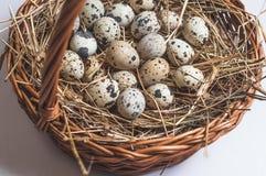 Przepiórek jajka w koszu Zdjęcie Stock