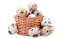 Przepiórek jajka w małym łozinowym koszu Na biały tle odosobniony obraz royalty free