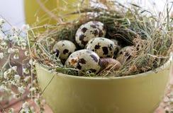 Przepiórek jajka w pucharze, zbliżenie Obrazy Royalty Free