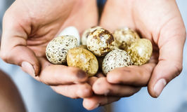 Przepiórek jajka w rękach Fotografia Stock