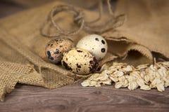 Przepiórek jajka z owsami Fotografia Royalty Free