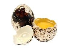 przepiórka jajeczna Obrazy Royalty Free