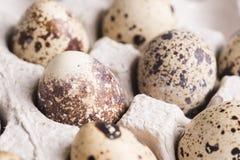 Przepi?rek jajka w kartonowy pakowa? Jarski organicznie eco jedzenie zbli?enie obraz royalty free