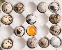 Przepi?rek jajka w przypadkowym rozkazie z yolk w kartonowy pakowa? Jarska ?ywno?? organiczna Eco produkty zdjęcia stock
