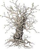 Przeplatający drzewo Obrazy Royalty Free