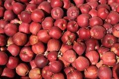 przepyszne czerwone jabłko Obraz Stock