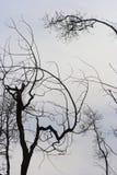 przerażające drzewa fotografia stock