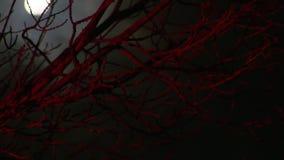 Przerażający bezlistny drzewo i księżyc w pełni zbiory wideo