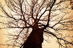 Przerażający Jałowy drzewo Zdjęcie Stock