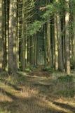 przerażający las Obraz Stock